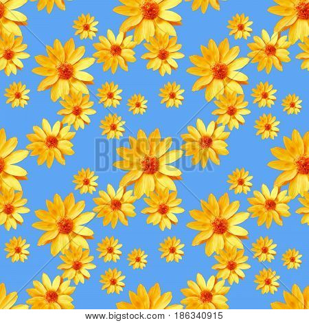 Adonis Texture of flowers. Seamless pattern for continuous replicate. Floral background photo collage for production of textile cotton fabric. For use in wallpaper covers.