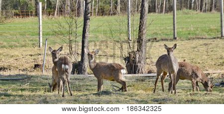 Wild forest animals captive southern Bohemia Czech Republic