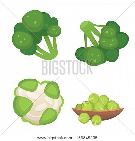 Vegetable set with broccoli, kohlrabi and other different cabbages