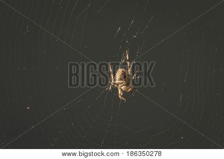 Spider At The Center Of Its Web