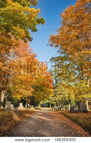 Autumn trees along a cemetery path in New England