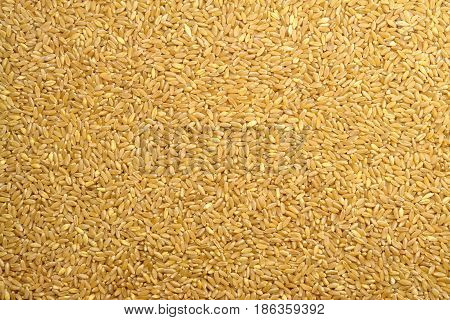 Wheat Grain Texture (Photo taken from top view)