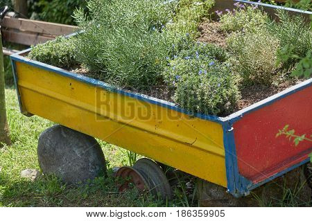 old wagon as a planter on the farm