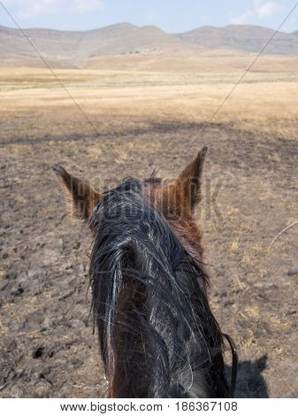 Point of view shot of a basuto pony head from a horse riders perspective, mountains of Lesotho, Africa.