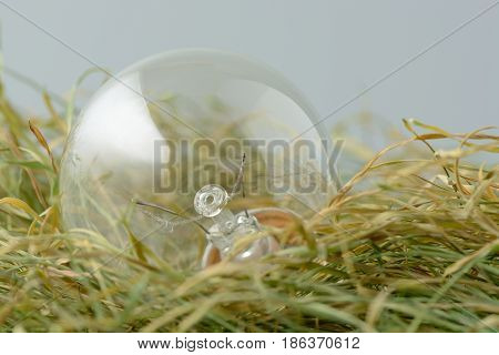 Environmentally Unfriendly Incandescent Bulb On The Dry Grass