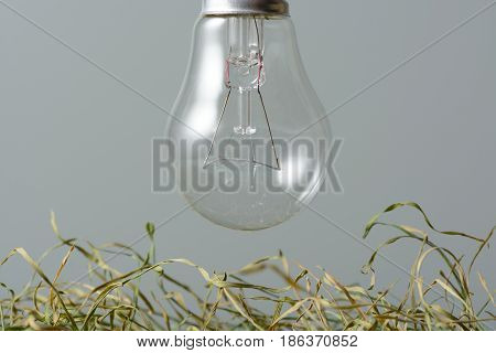 Environmentally Unfriendly Incandescent Bulb Over The Dried Grass