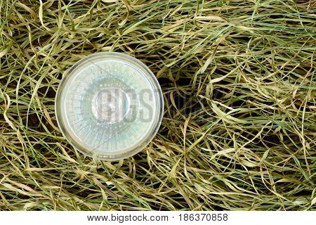 Environmentally Unfriendly Halogen Bulbs On The Dry Grass