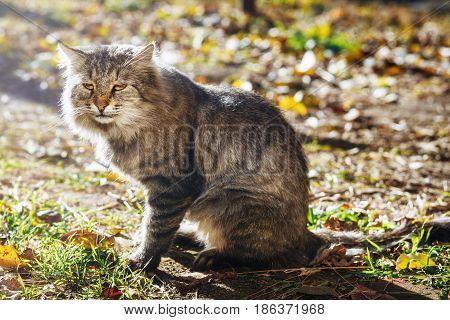 Close up big grey street cat sitting on ground on sunny day
