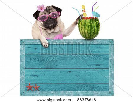 bikini babe pug dog puppy with blue vintage wooden beach sign and watermelon cocktail isolated on white background