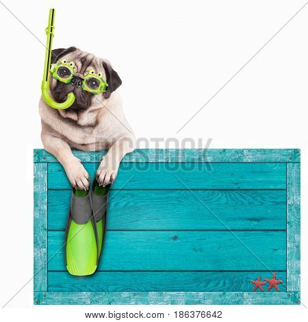 funny pug dog with blue vintage wooden beach sign with goggles snorkel and flippers for summer isolated on white background