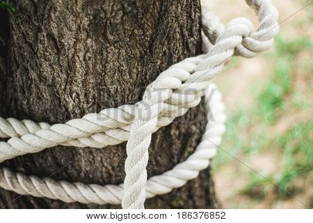 A rope with knot around tree trunk. Alpine rope knots in training camp.