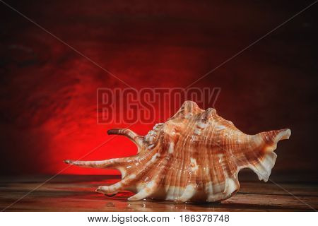 Fauna background- seashell lies on an old wooden board.