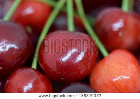 Close view on pile of delicious red fruit...Prunus avium or wild cherry