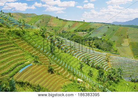 Terraced rice field with blue sky and mountain view in Java Island Indonesia