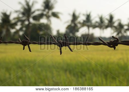 barbed wire fence with green background for nature.