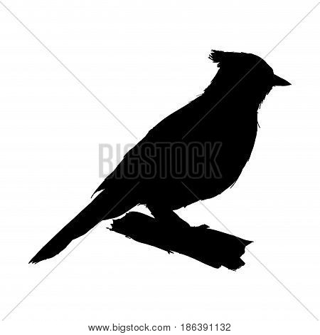 tufted titmouse bird, branch posing for a portrait pictogram vector illustration
