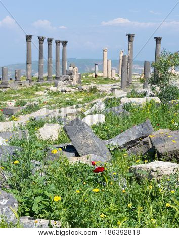 Umm Qais Temple fluted columns and stone ruins in background against blue sky with lush vegetation with yellow flowers and a single red poppy in the foreground. Photographed in Jordan, near Irbid.