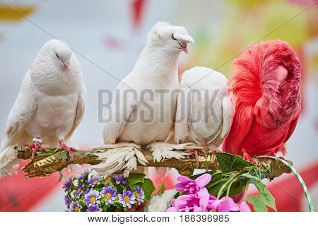Multicolored Pigeons, One Is Different