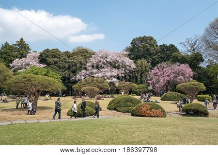 TOKYO JAPAN - APRIL 13 2017 : Many peoples come to enjoy Hanami or picnic as Japanese style in springtime with cherry blossom at Shinjuku Gyoen Park on 13 Apr2017.