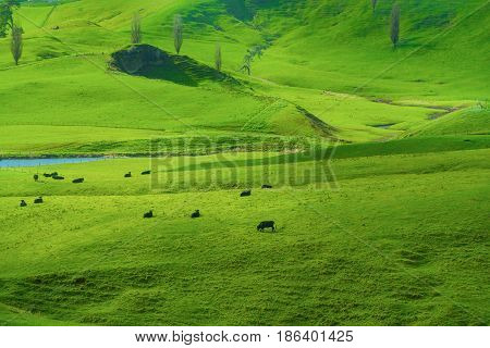 View of green hills in New Zealand