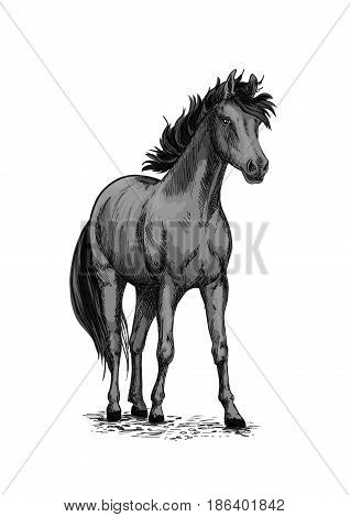 Horse or wild racehorse mustang. Black trotter or racer stallion vector sketch symbol for equine sport races or rides and equestrian racing contest or exhibition