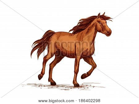 Horse or wild arabian racehorse. Brown mustang trotter or racer stallion vector sketch symbol for equine sport races or rides and equestrian racing contest or exhibition poster