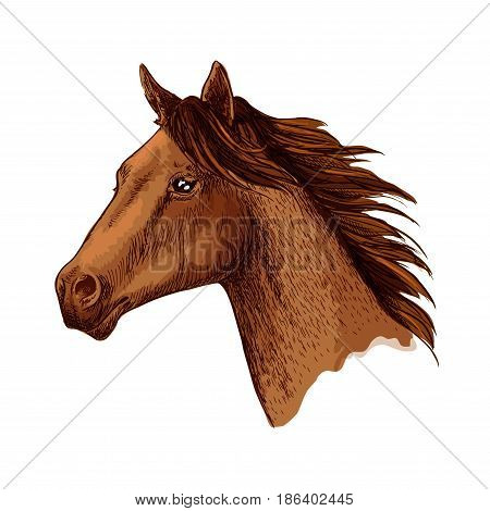 Horse or racehorse head. Arabian brown mustang stallion or trotter vector sketch. Arabian racer symbol for equine sport races or rides, for equestrian racing contest, exhibition or horserace