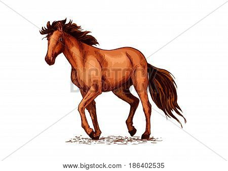 Horse sketch of wild mustang stallion. Brown horse walking on the pasture. Equestrian sport, horse racing, ride club symbol or t-shirt print design