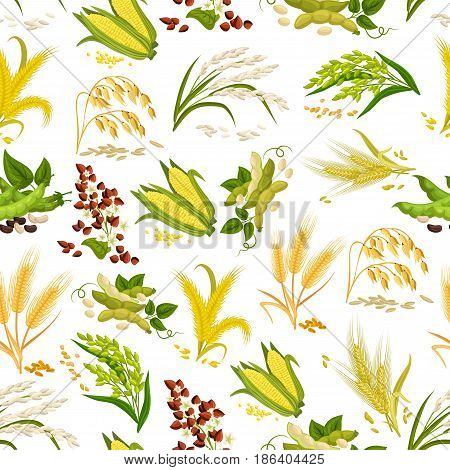 Cereals and grain vector seamless pattern. Wheat and rye ears, buckwheat seeds and oat or barley millet farmer plant and rice sheaf. Agriculture harvest of corn cob and farm legume beans or pea