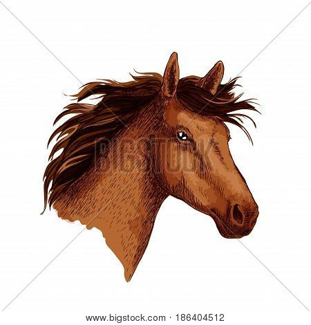 Horse or wild racehorse stallion head. Arabian brown mustang trotter or racer. Vector sketch symbol for equine sport races or rides, for equestrian racing contest or exhibition