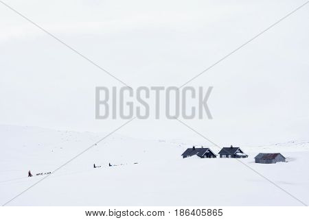 Dog sleds on the snowcovered mountain plateau Hardangervidda in Norway