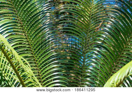 Tropical Palm Leaf Texture