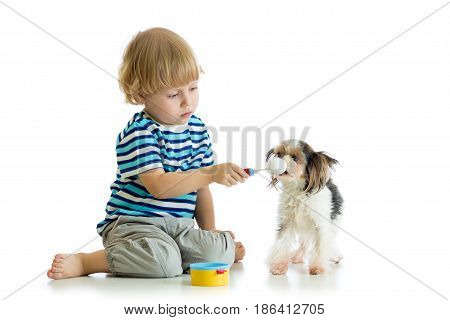 Kid playing with dog and feeding his with toy spoon. Isolated on white background.