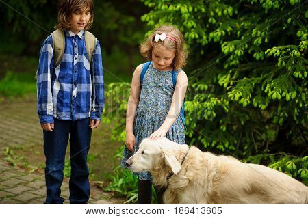 Little schoolchildren met on the way to school a large dog. The good-natured retriever drew the children's attention. The girl fearlessly strokes the big dog.