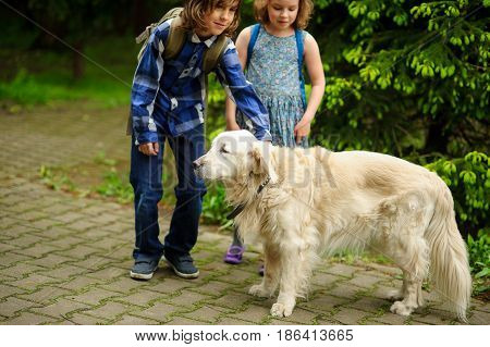 Little schoolchildren meet on the way to school a large dog. The good-natured retriever drew the children's attention. The boy fearlessly strokes the big dog.