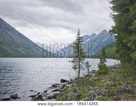 Multinskiye Lake, Thuja Trees On Shore, Altai Landscape
