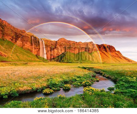 Seljalandsfoss waterfall. Summer landscape with a rainbow and a river. Amazing light of the evening sun. Yellow flowers in the valley. Famous tourist attraction of Iceland