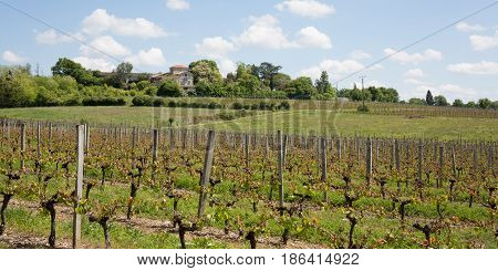 a spring vineyards near Bordeaux in France