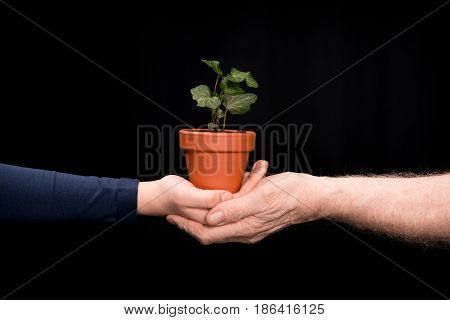 Grandchild And Grandfather With Ivy Plants