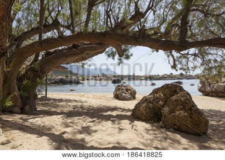 rocks and old tree on sandy stoupa beach on greek peninsula mani on peloponnese in spring with sea and old town in the background