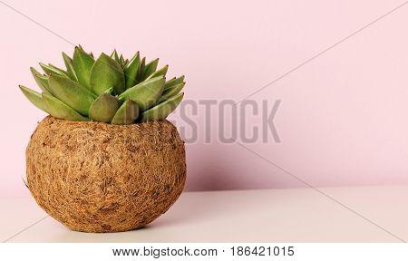 succulent potted plant