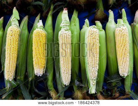 Fresh raw corn on the cob at the village market
