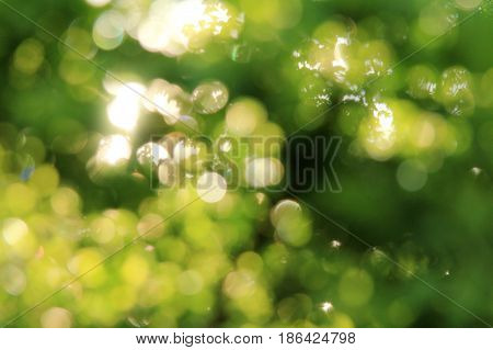 Light effects in the lumens of blurred green leaves / summer sun hares
