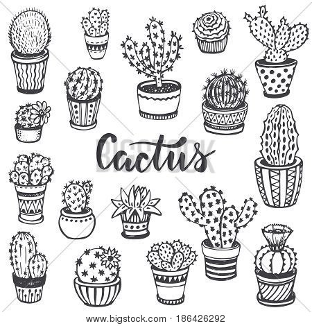 Collection of hand drawn cactus in sketch style. Beautiful black and white nature vector set.