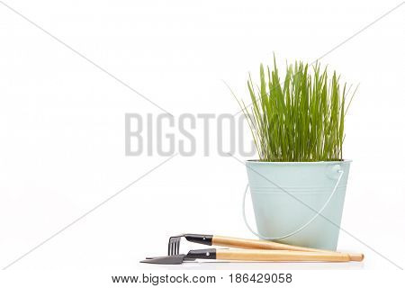 Gardening tools, bucket with young green oats on a white  background. Concept of spring gardening.