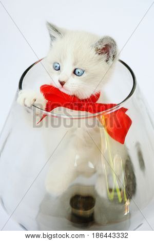 kitten with a red bow in a glass vase