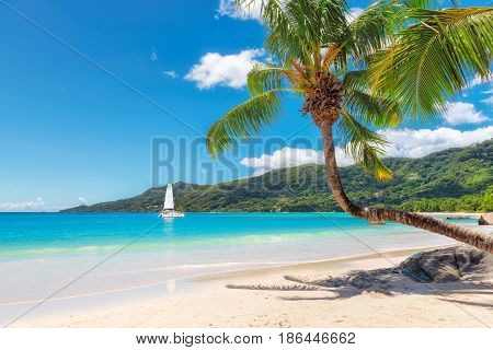Palm tree on tropical beach in Seychelles, Beau Vallon, Mahe island.
