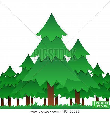 Summer Coniferous Forest