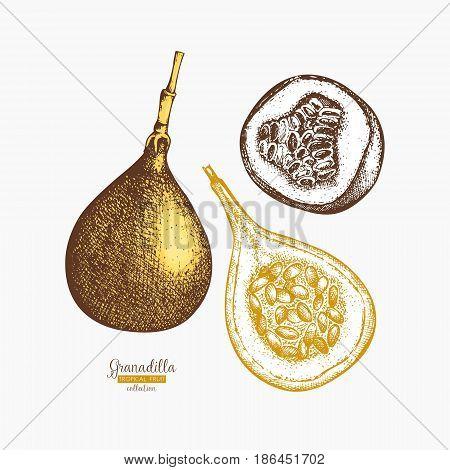 Engraved botanical sketch. Passion fruit design. Tropical plant