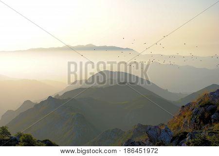 Flock of birds flying over shaded hills